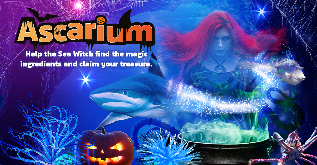 SEA LIFE, Bray | Halloween Events in Ireland | YourDaysOut