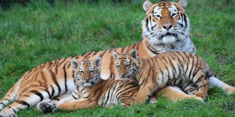 Dublin Zoo | Things to do in Dublin | YourDaysOut