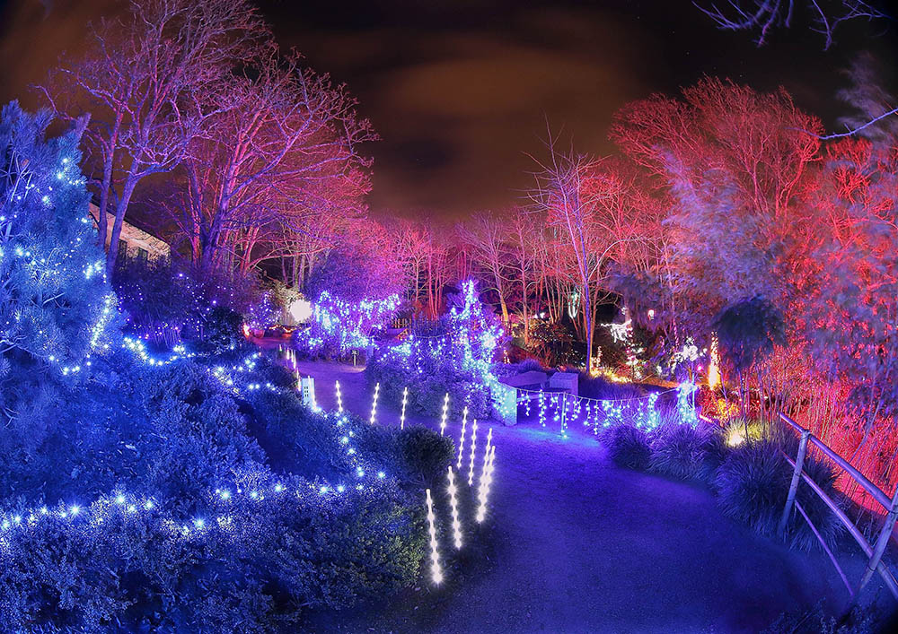Lafcadio Hearn Japanese Gardens | Enchanted Winter Lights Festival | YourDaysOut