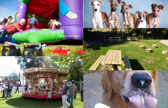Things to do in County Dublin, Ireland - DSPCA PetFest - YourDaysOut