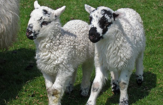 Things to do in County Kerry, Ireland - Scanlon's Pet Farm - YourDaysOut