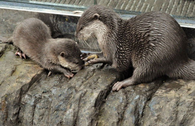 Things to do in Northern Ireland Newtownards, United Kingdom - Otter Mayhem - YourDaysOut