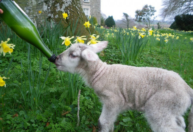 Things to do in County Kildare, Ireland - Stonebrook Farm - YourDaysOut