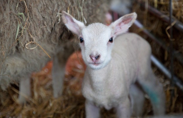Things to do in County Dublin, Ireland - Woolapalooza Sheep & Farm Festival - YourDaysOut - Photo 1