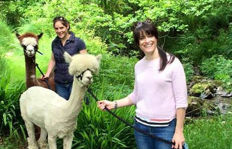 Things to do in County Cork, Ireland - Alpaca walks - YourDaysOut