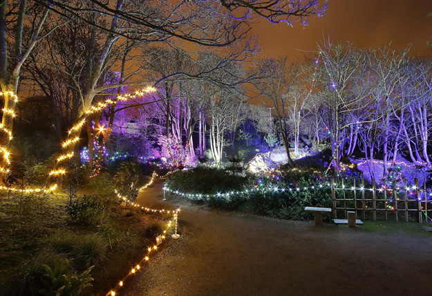 Things to do in County Waterford Tramore, Ireland - Enchanted Garden Winter Light Festival - YourDaysOut
