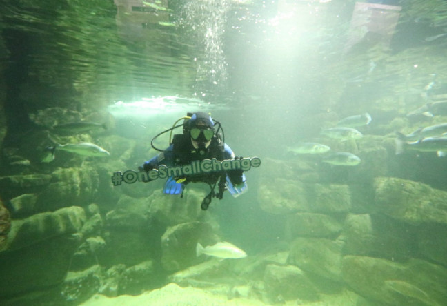 Things to do in , Ireland - Galway Atlantaquaria - World Ocean Day - YourDaysOut - Photo 1