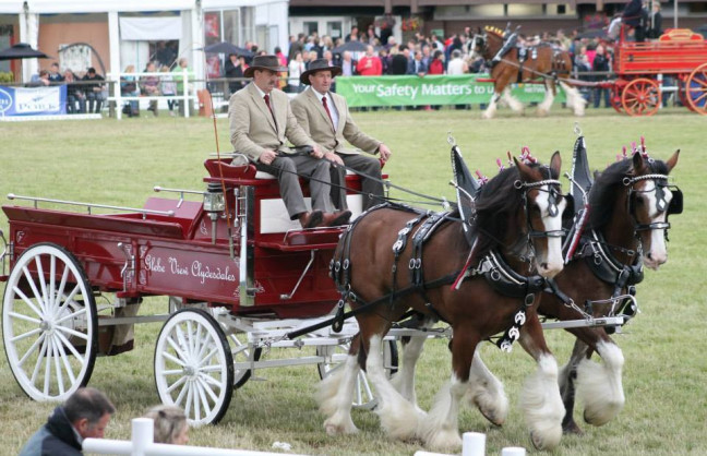 Things to do in Northern Ireland Coleraine, United Kingdom - Castlerock Clydesdale Show - YourDaysOut