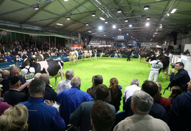 Things to do in Northern Ireland Lisburn, United Kingdom - The Royal Ulster Winter Fair - YourDaysOut