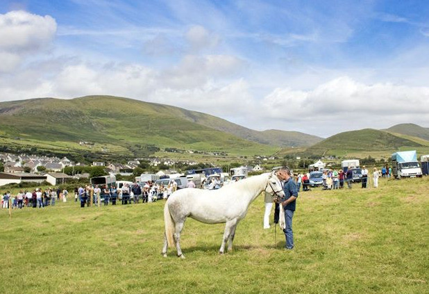 Things to do in County Kerry, Ireland - West Kerry Agricultural Show and Sheepdog Trials - YourDaysOut