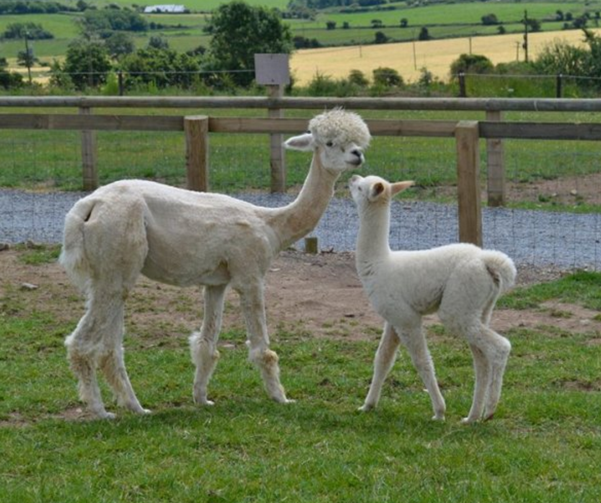 Things to do in County Waterford, Ireland - Ardmore Open Farm - YourDaysOut