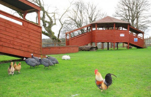 Things to do in County Kerry, Ireland - Kennedy's Pet Farm - YourDaysOut