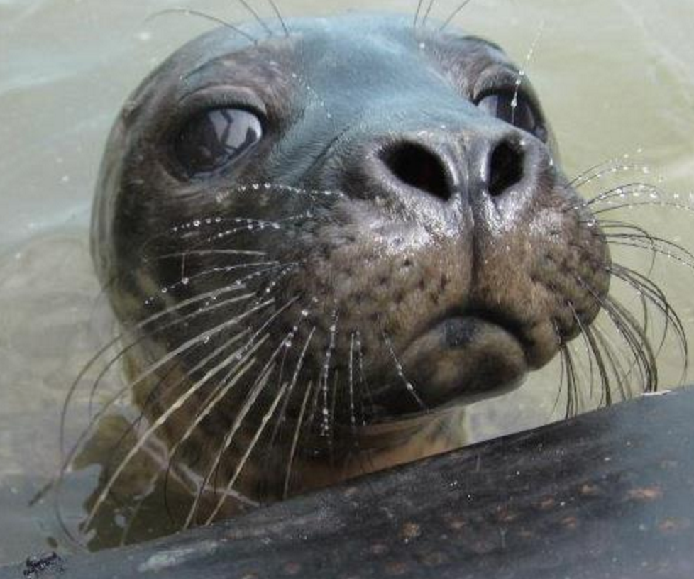 Things to do in County Wexford, Ireland - Seal Rescue Ireland - YourDaysOut - Photo 1