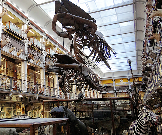 Natural History Museum of Ireland - YourDaysOut