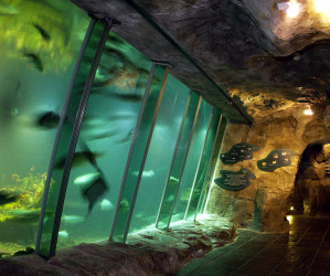 Things to do in Northern Ireland Newtownards, United Kingdom - Exploris Aquarium - YourDaysOut