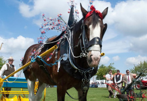 Things to do in England Newark, United Kingdom - Nottinghamshire County Show - YourDaysOut