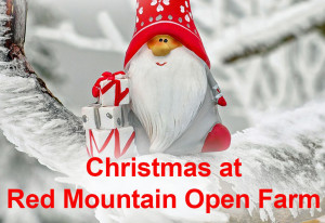 Things to do in County Meath, Ireland - Christmas @ Red Mountain Open Farm - YourDaysOut