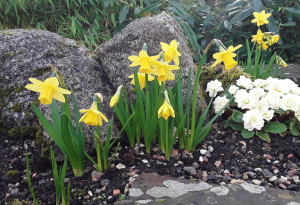 Things to do in County Carlow, Ireland - Daffodil Weekend - YourDaysOut