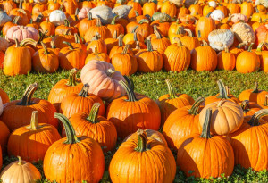 Things to do in County Galway, Ireland - Galway Pumpkin Patch - YourDaysOut