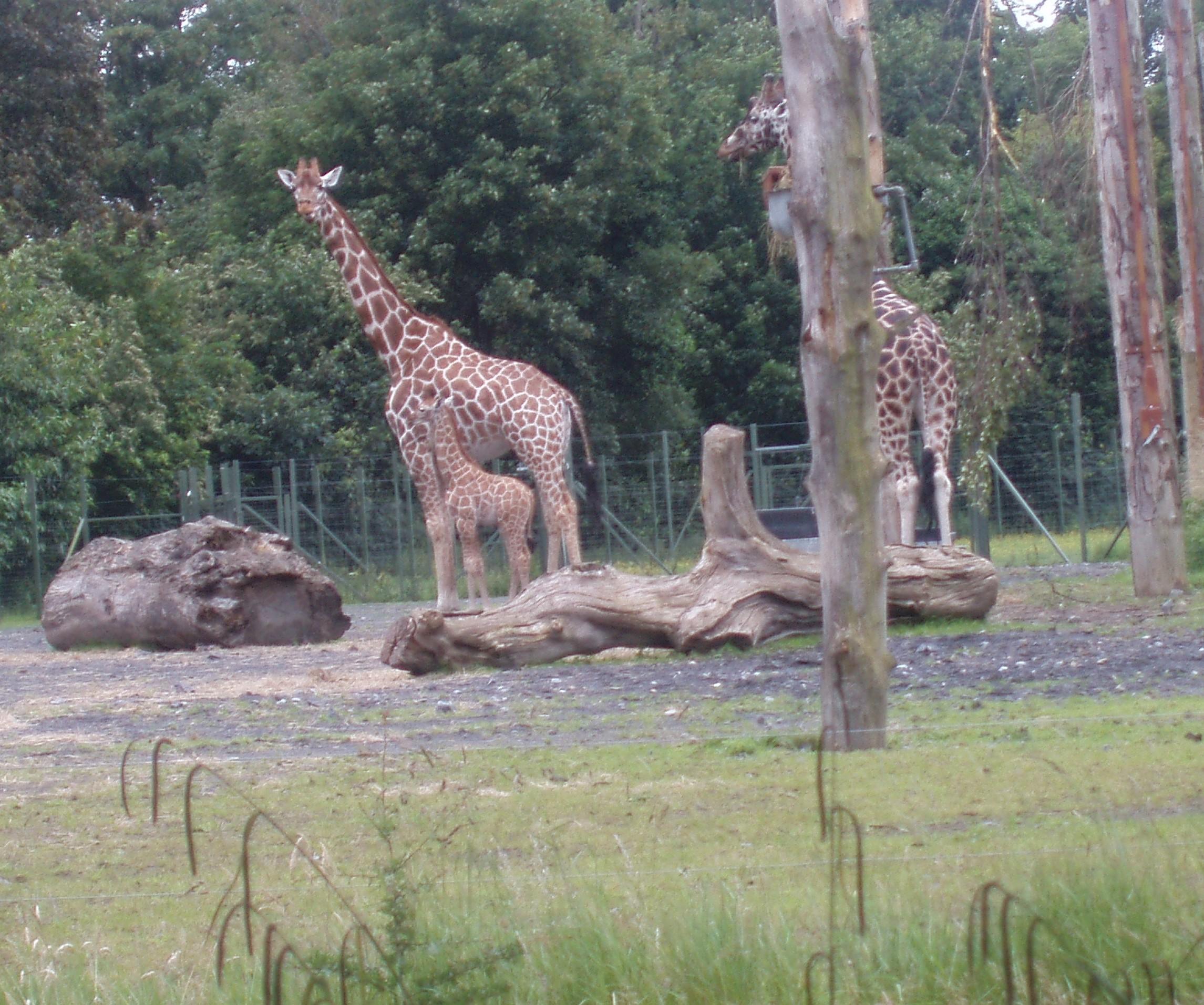 Dublin Zoo
