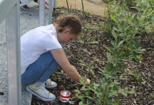 Things to do in County Dublin, Ireland - Gardening for Kids Workshop - YourDaysOut