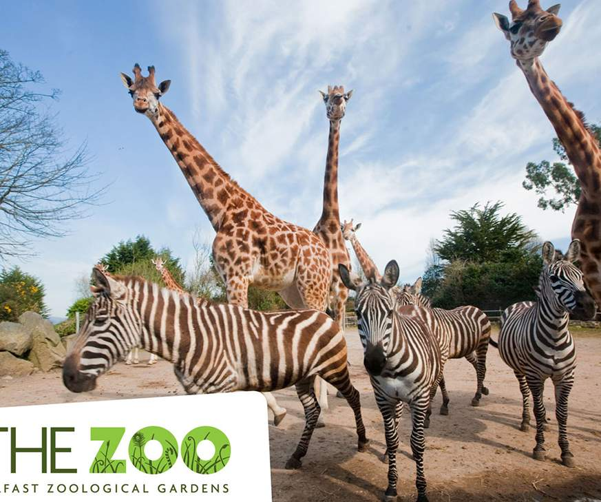 Things to do in Northern Ireland Newtownabbey, United Kingdom - Belfast Zoo - YourDaysOut
